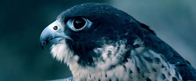 Le faucon est l'emblème de la société de robinetterie haut de gamme Horus